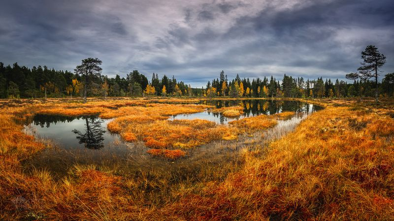 forest,norway,boreal,norwegian,wetland,autumn,autumnal, Autumn in the north фото превью