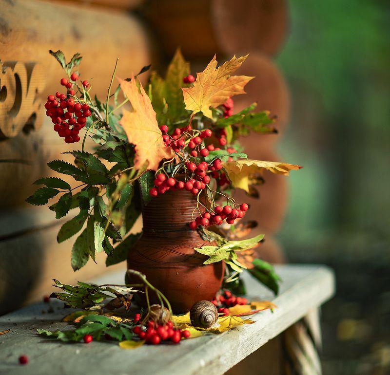 осень, натюрморт,ягоды, рябина, улитки,клён,листья, stilllife, autumn, snail,berry, foliage, nature Осенние мотивыphoto preview