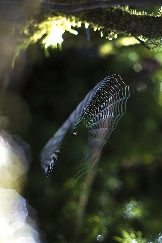 осень, пейзаж, паутина, природа Осенняяphoto preview