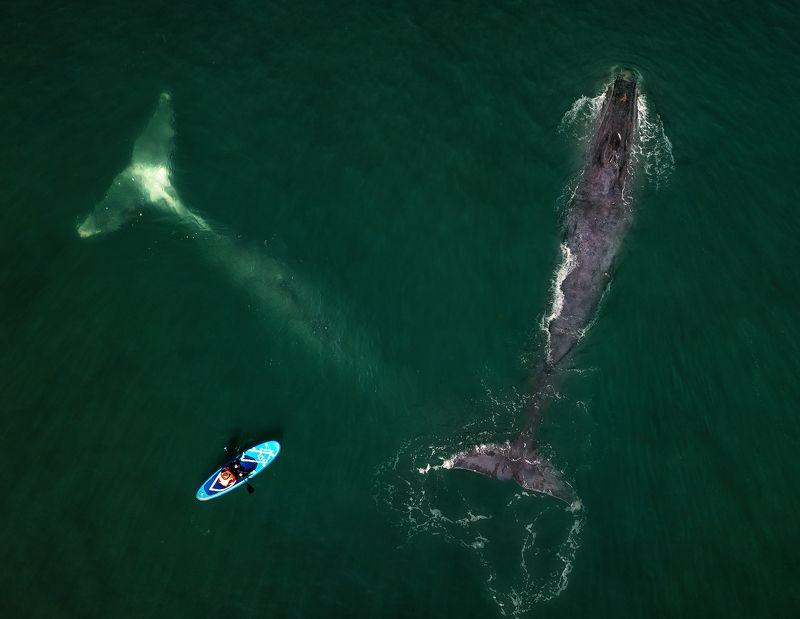 шантары,киты Люди и киты...photo preview