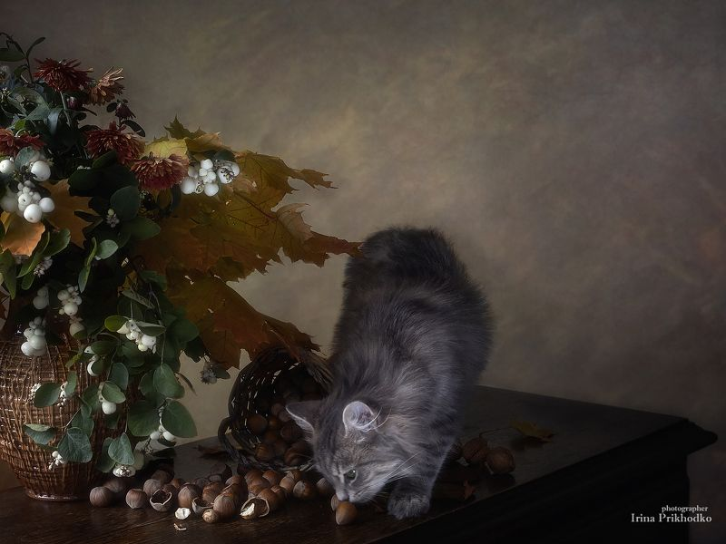 постановочное фото, осень, осенний букет, орехи, любопытный котенок Любопытство - источник знанийphoto preview