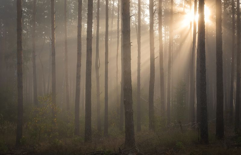 Сентябрьское утро в лесуphoto preview