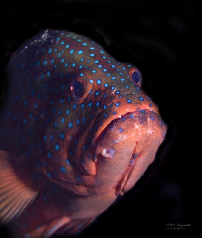 подводное фото подводный мир хургада египет жогло zhoglo красное море Грустьphoto preview