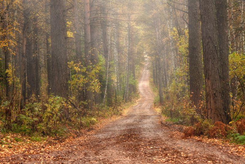 красноярский край. торгашинский  хребет, туман. Дорожка в осень.photo preview