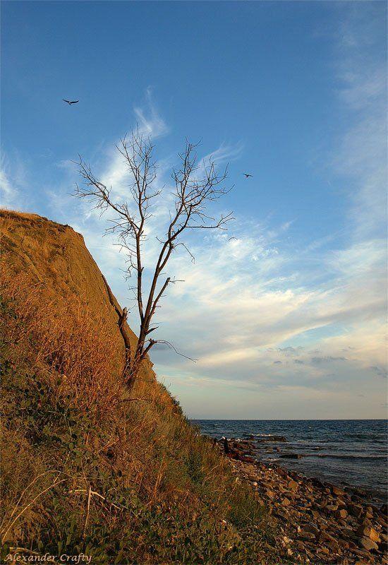 крым, закат, море,  дерево, камни,  чайки На берегуphoto preview