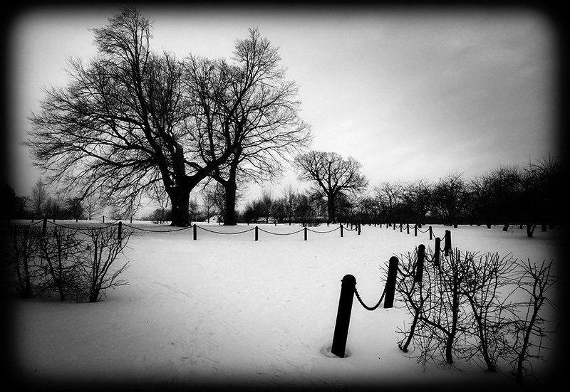 мороз,ветер,дерево,коломенское Ознобphoto preview
