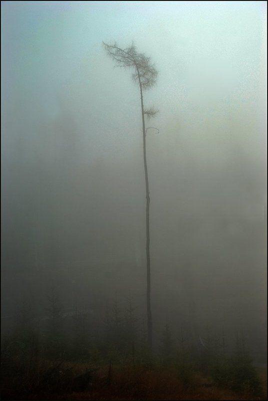 Туманная серия 2(2)photo preview