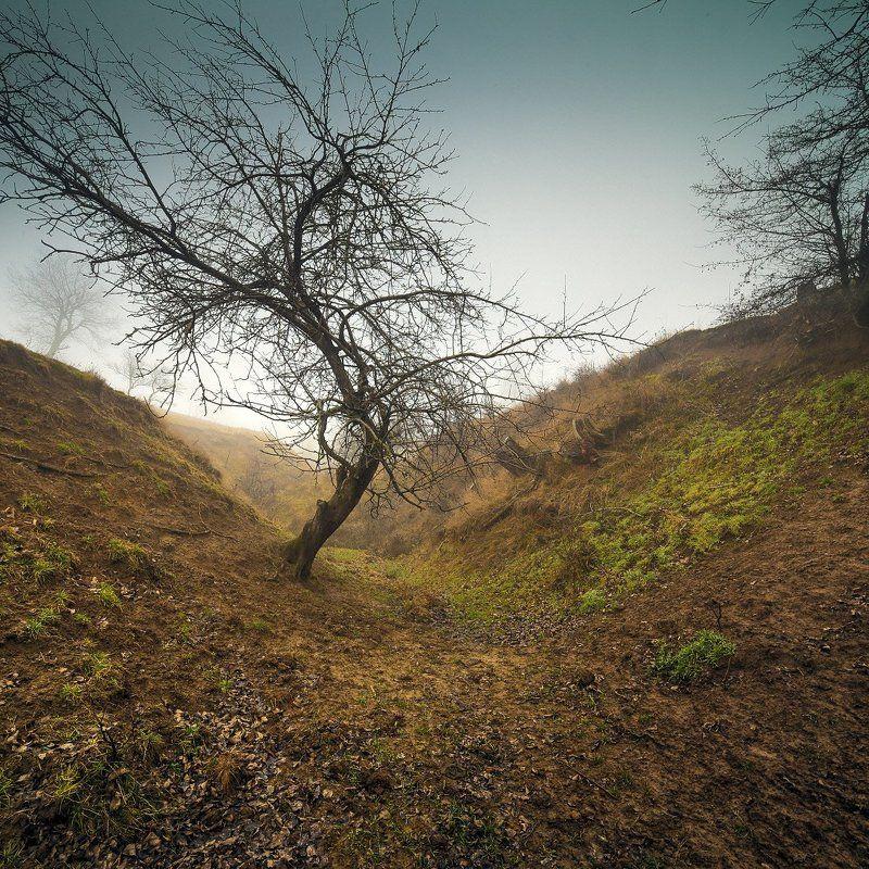 дерево в  оврагеphoto preview