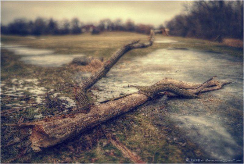 Fallen...photo preview
