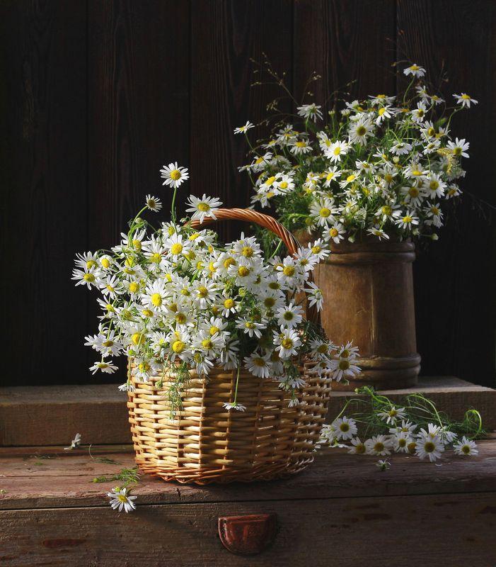 натюрморт, фотонатюрморт, лето, мёд, цветы, ромашки, наталья казанцева Люблю, как смотришь на меня, июль, глазком ромашки простодушной,...photo preview