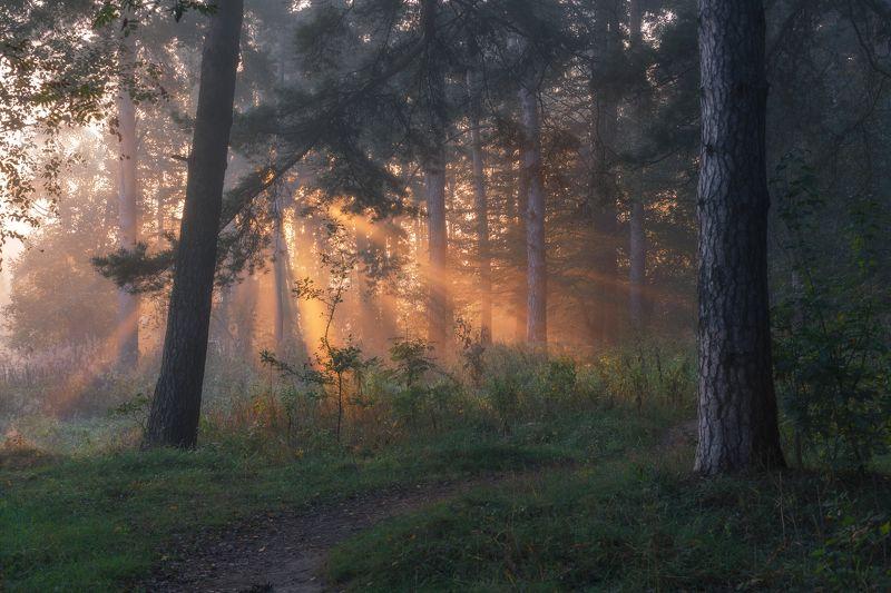 природа, туман, рассвет, Московская область, пейзаж, новый день Утро сентябряphoto preview