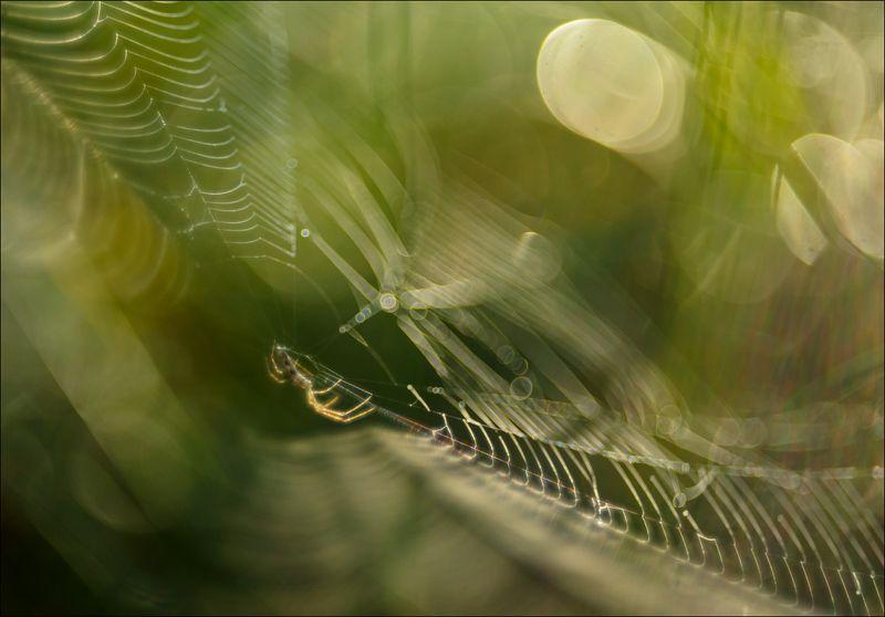 Паутиновые миры болотаphoto preview