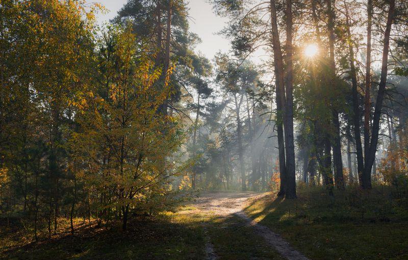 лес осень октябрь утро туман рассвет Осеннее утроphoto preview
