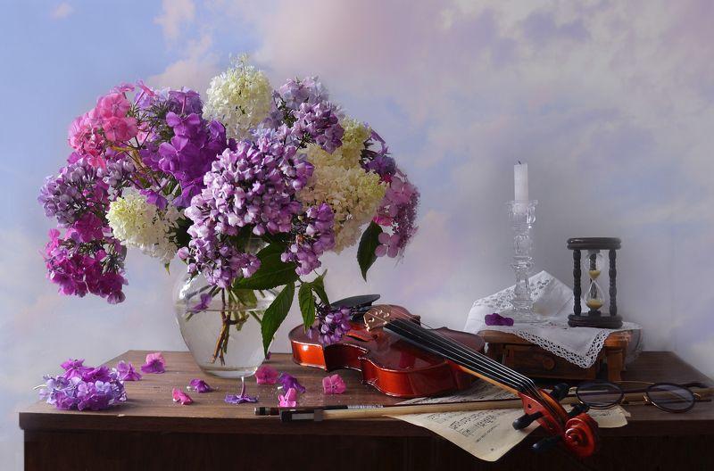 still life,цветы, фото натюрморт, флоксы, натюрморт, настроение,август,скрипка, ноты,свеча, песочные часы В облаках витают флоксы…photo preview