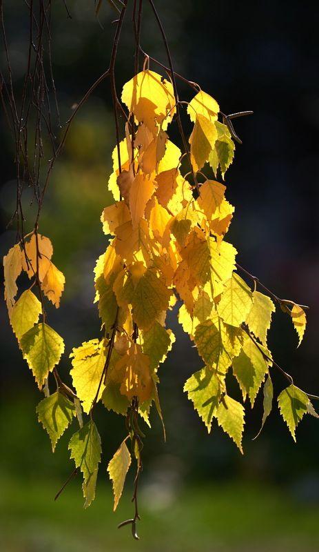 Осенью 2photo preview