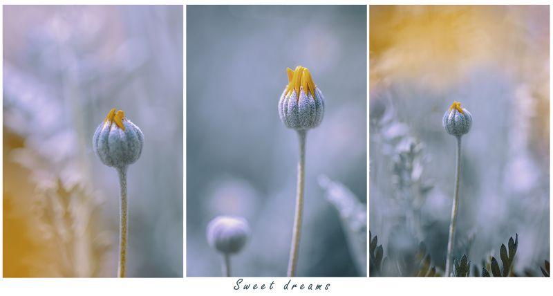 flowers, macro, spring Sweet dreams фото превью