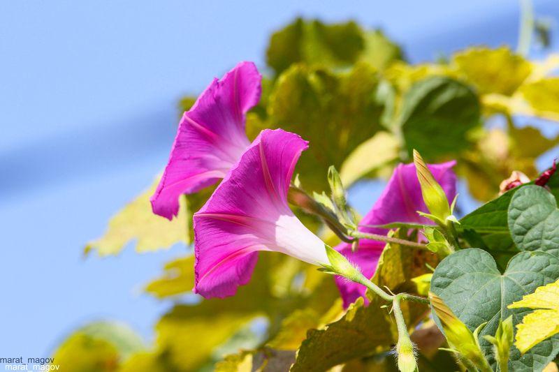 флора,природа,цветы, photo preview