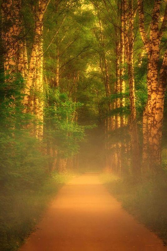пейзаж, природа, nature, landscape, туман, аллея ***photo preview