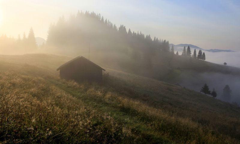 Утренняя свежесть фото превью