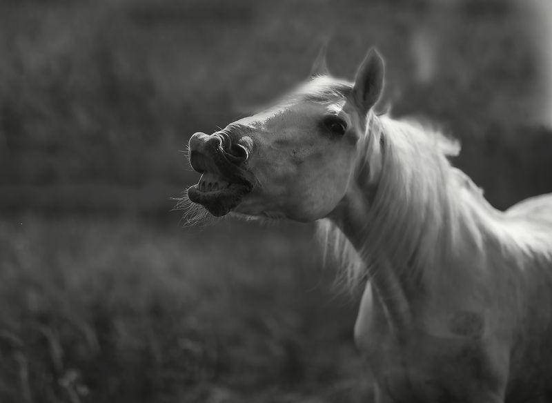 лошадь,улыбка, гримаса, эмоции,поле, природа, horse, smile, emotional, nature Улыбка лошадиphoto preview