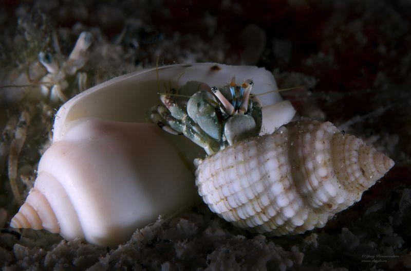 подводное фото подводный мир хургада египет жогло zhoglo красное море Битваphoto preview