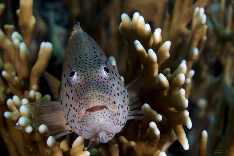 подводное фото подводный мир хургада египет жогло zhoglo красное море В Засадеphoto preview