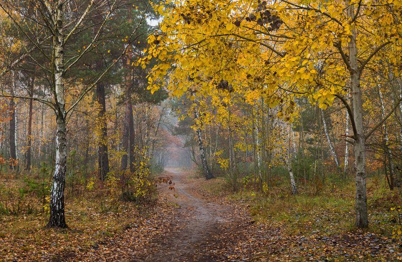 лес осень октябрь утро туман Пришла осенняя пораphoto preview