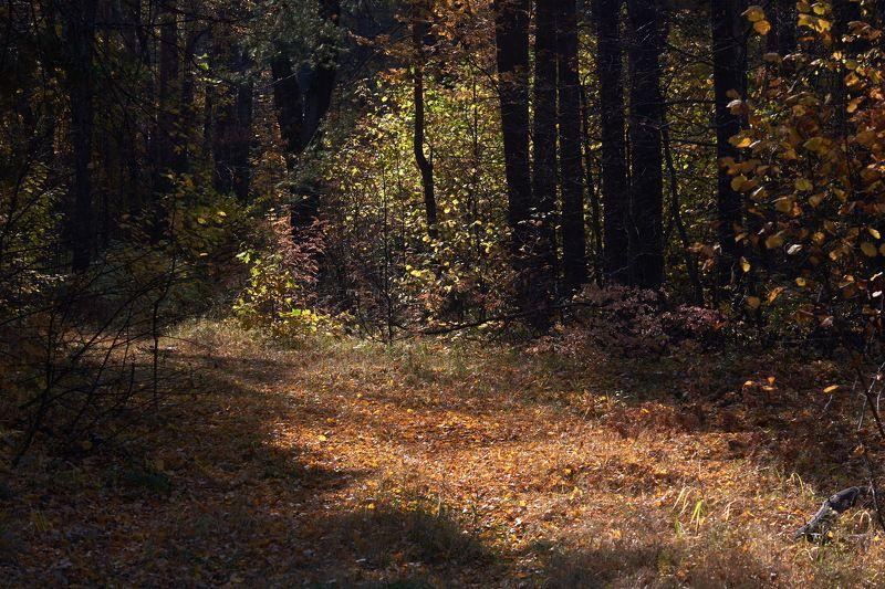Осенью 3photo preview