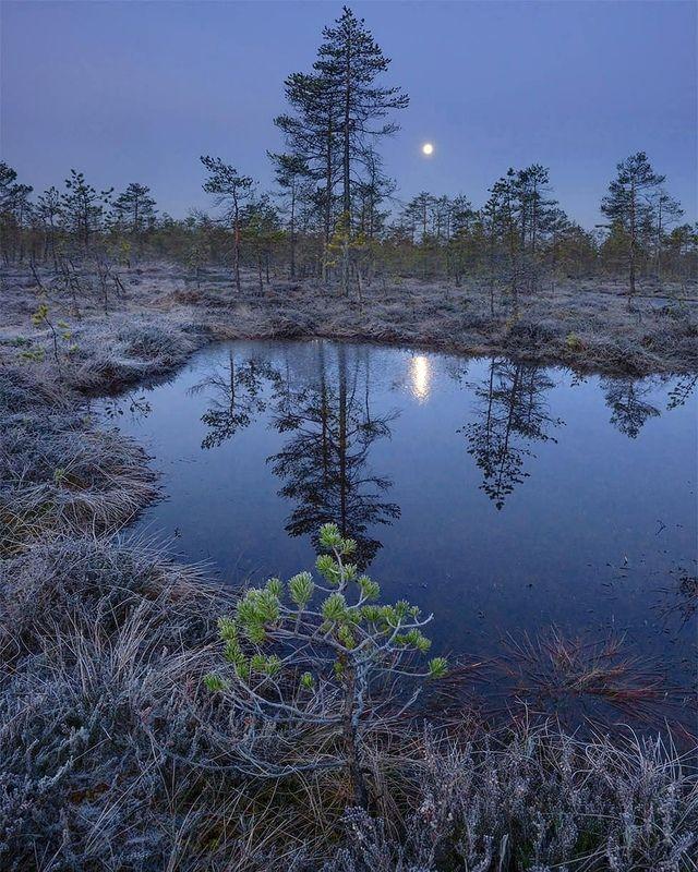 Лунное болото фото превью