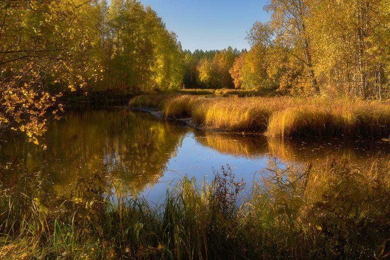 осень сентябрь река берег вода отражения тишина кусты деревья трава Рыжая река, заросшие берегаphoto preview