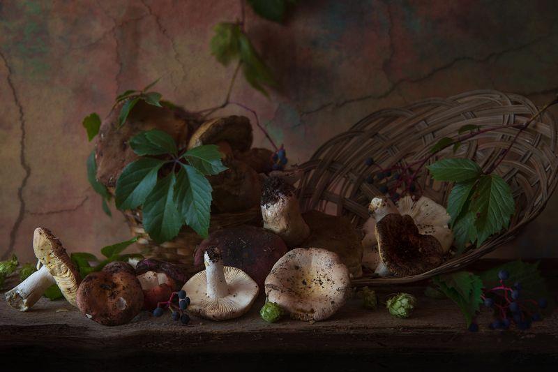 сыроежки,этюд,натюрморт,осень Этюд с сыроежкамиphoto preview