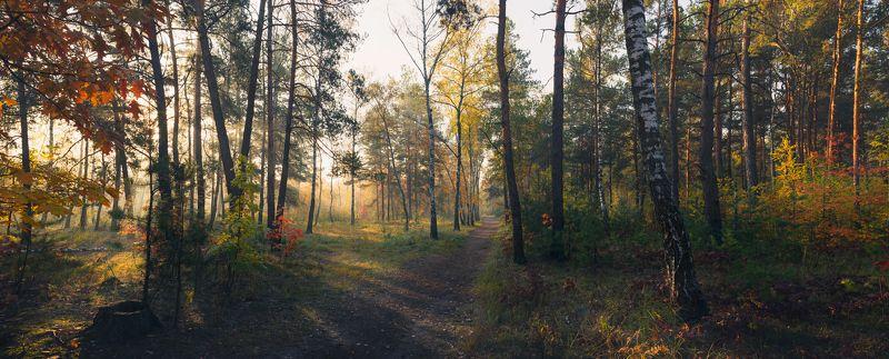 лес осень октябрь утро туман Уж холодны октябрьские рассветыphoto preview