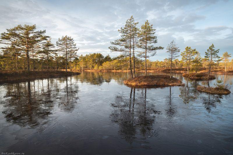 болото, болотные топи, ленобласть, ленинградская область, острова, сосны, отражение, осень \