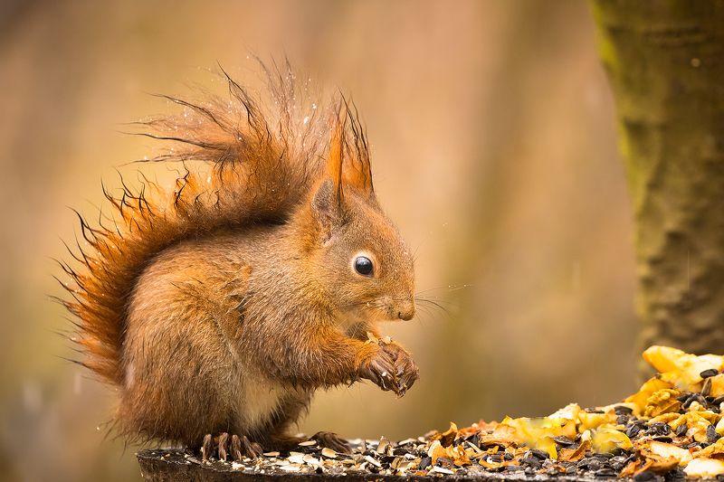Squirrelphoto preview
