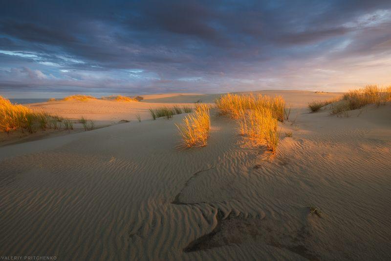 В дюнах Куршской косыphoto preview