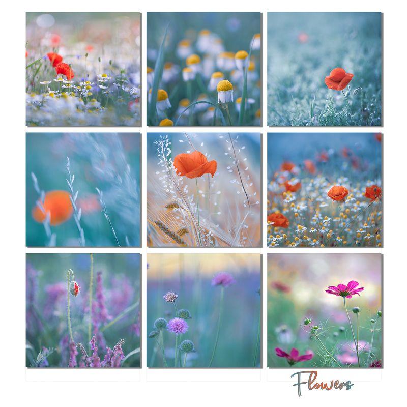 flowers, nature, macro, daisy, poppies, fields Flowers фото превью