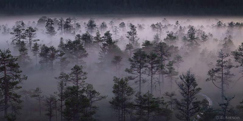 пейзаж, природа, болото, эстония Магия болотphoto preview