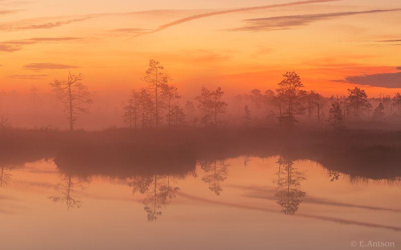 пейзаж, природа, болото, эстония Осень, пора тумановphoto preview