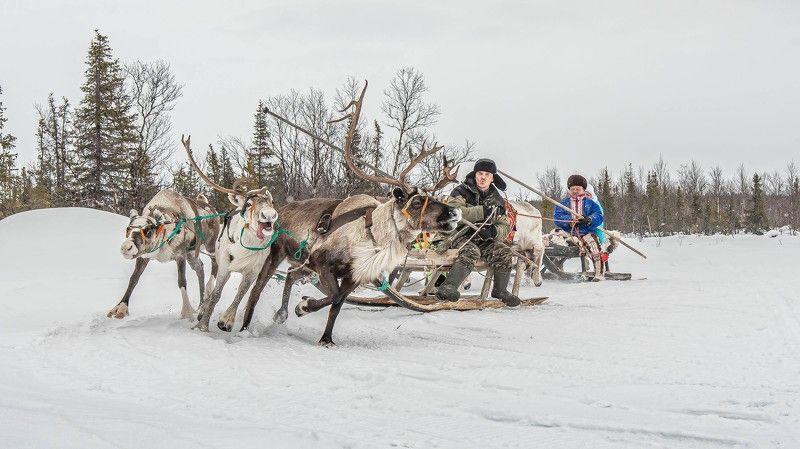 Спорт, оленеводы.Север Оленеводыphoto preview