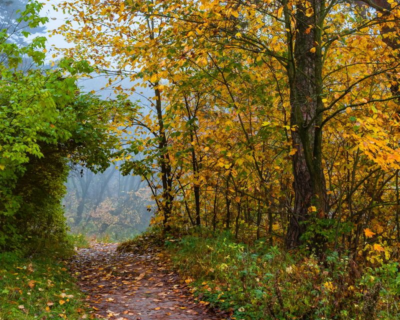 Лес, осень, пейзаж, туман По тропинкам осениphoto preview