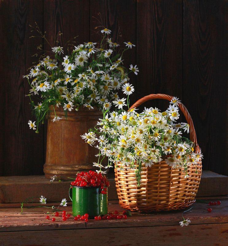 натюрморт, фотонатюрморт, лето, цветы, ромашки, ягода, красная смородина,  наталья казанцева Летнееphoto preview