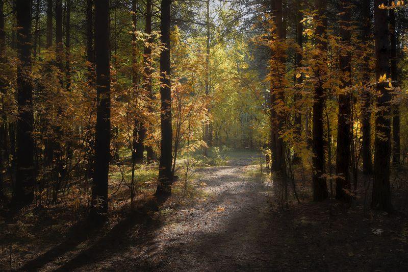 осень сентябрь лес дорога тишина кусты деревья сосны Солнечная дорожкаphoto preview