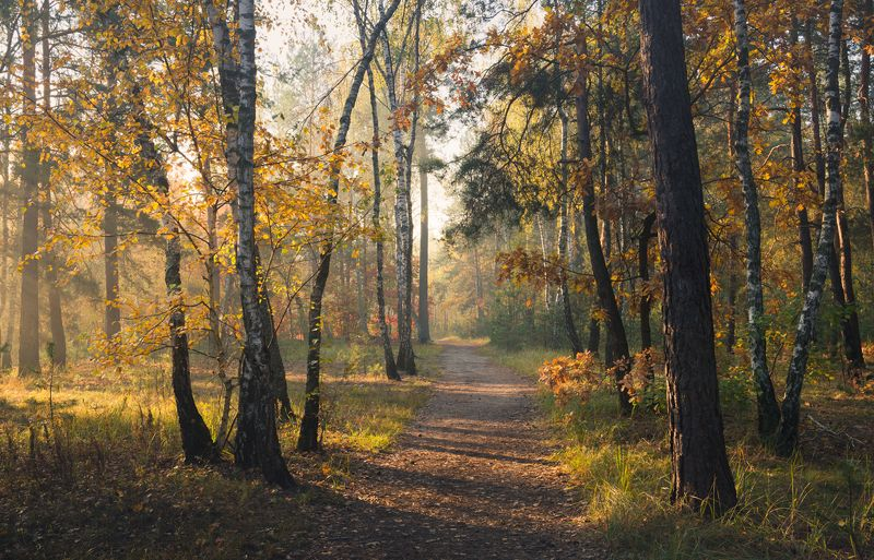 лес осень октябрь утро Следуя за утренним светомphoto preview