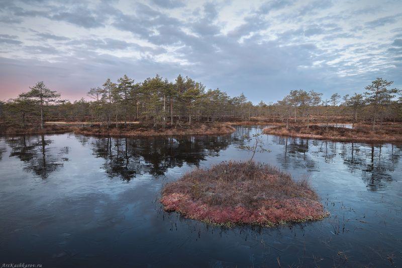 болото, болотные топи, ленобласть, ленинградская область, карельский перешеек, острова, сосны, отражение, ноябрь \