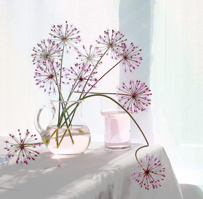 натюрморт, фотонатюрморт, лето, цветы, лук декоративный,  наталья казанцева Этюдик луковыйphoto preview