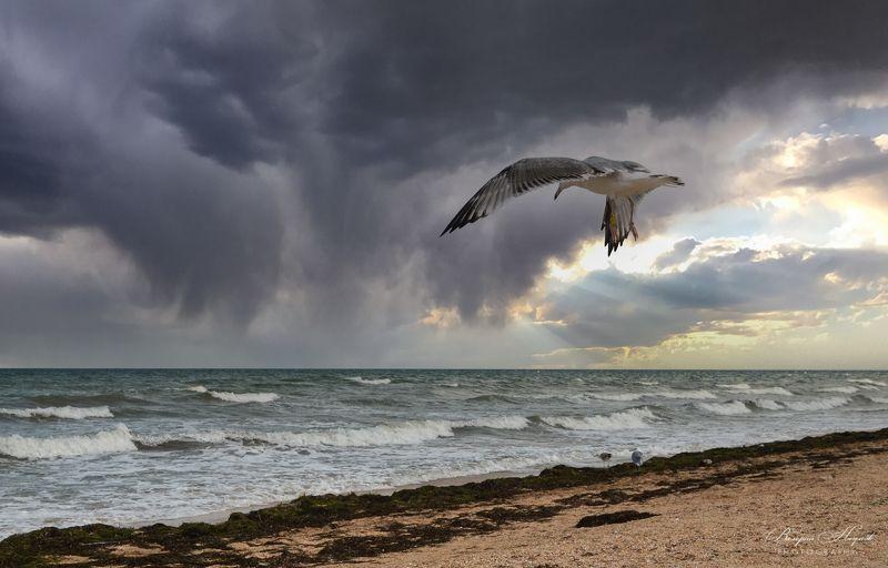 азов, море, ветер, волна, лучи, облака, сентябрь Небесное подобие птицыphoto preview