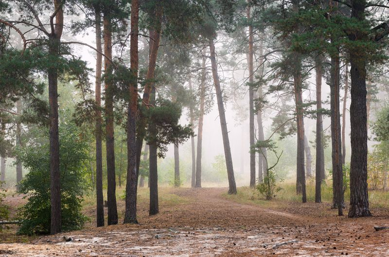 лес осень сентябрь туман Лес околдован тишиной туманнойphoto preview
