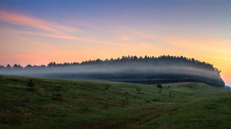 рассвет,туман, лес, Нежно обнимая лесphoto preview