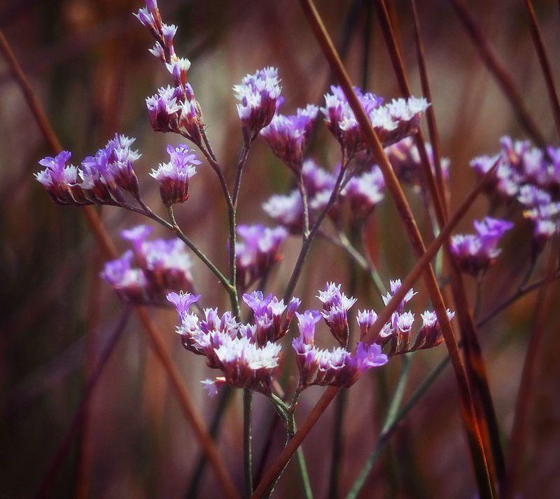 Purple flowersphoto preview