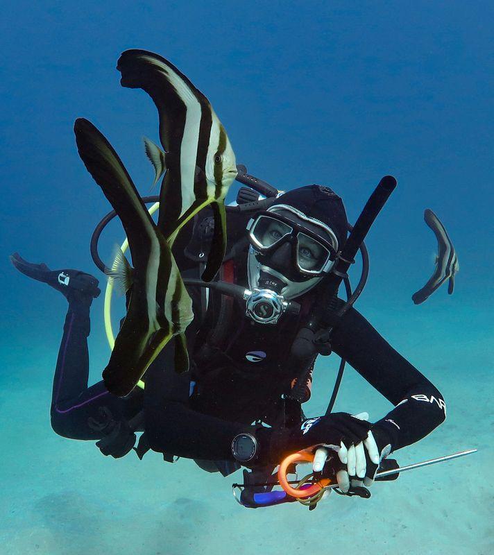 подводное фото подводный мир хургада египет жогло zhoglo красное море С подводными ангеламиphoto preview